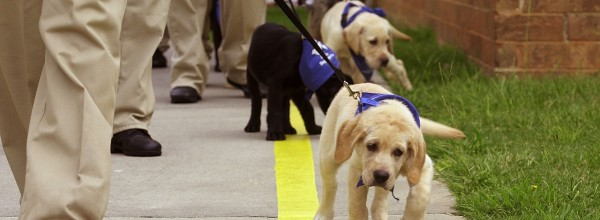 Inmate Guide Dog Training