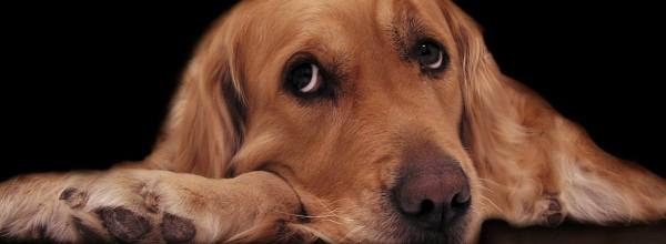 Sad_dog_photo2