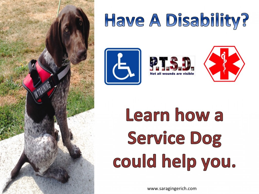 How Much Does It Take To Train A Service Dog